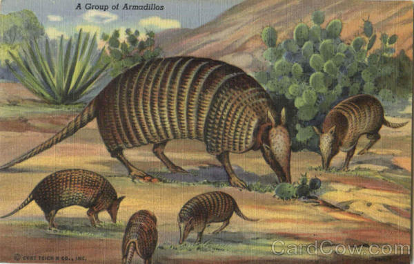 A Group Of Armadillos
