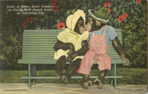 A Green Bench Romance At Florida Wild Animal Ranch St. Petersburg