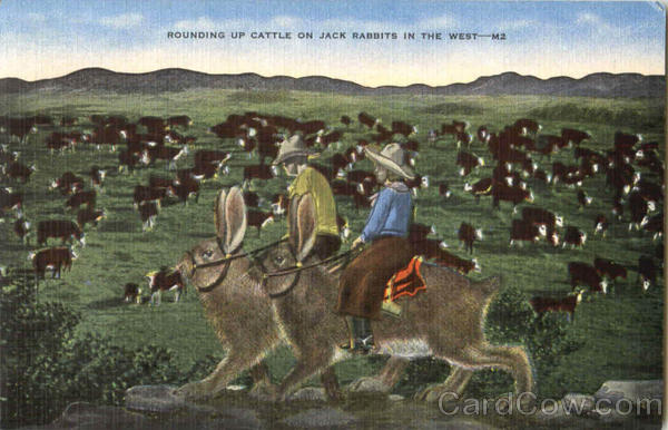 Rounding Up Cattle Jack Rabbits Exaggeration