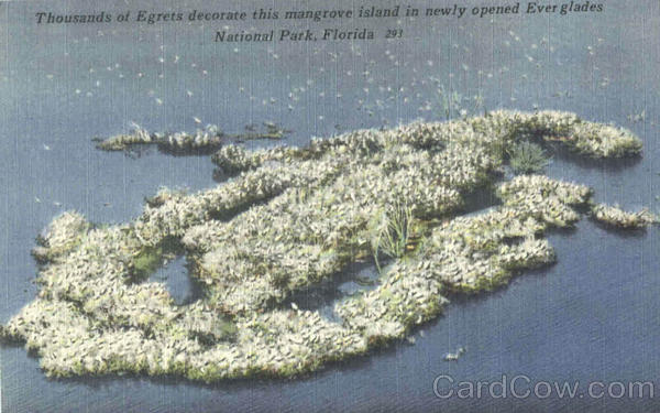 Thousands Of Egrets Decorate This Mangrove Island Birds