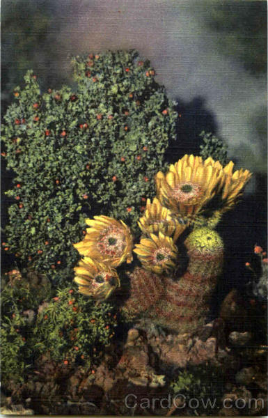 Rainbow plant in the desert - photo#13