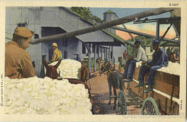 Bringing Cotton to Market Black Americana