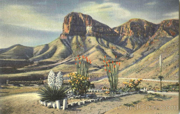 Signal Peak In The Guadalupe Mountains Cactus & Desert Plants