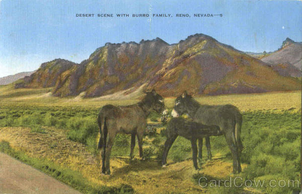 Desert Scene With Burro Family Reno Nevada