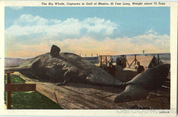 The Big Whale Fish
