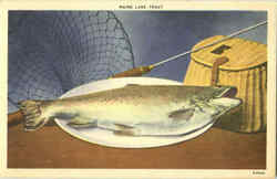 Maine Lake Trout
