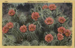 Strawberry Or Hedgehog Cactus