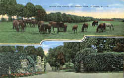 Mares And Foals, Claiborne Farm