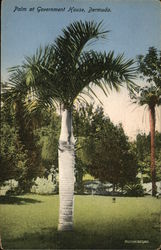 PAlm at Government House, Bermuda