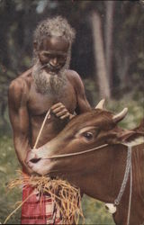 A Carter and his Bull, Ceylon