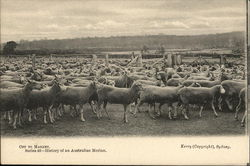 Off to Market. Series 46 - History of an australian Merlino