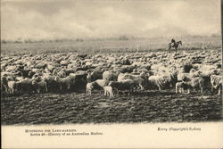 Mustering for Lamb-Warking. Series 46- History of an Australian Merlino