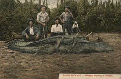 A good day's Work - Alligator Hunting in Panama Postcard