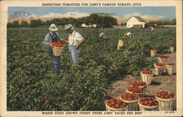 Inspecting Tomatoes for Libby's Famous Tomato Juice