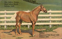 Hotel Jeffery Ranch / Encinal Registered Half Breed 11645 PHBA 2304