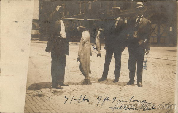 71 lbs - 4' 9 long Fulton Cat displayed by three men - caught by Ned. 7/22/1908 Keokuk Iowa
