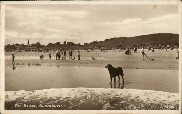 People and dogs on the Beach Alnmouth England