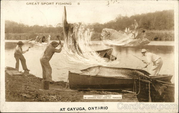 Great Sport Fishing Cayuga Canada Ontario