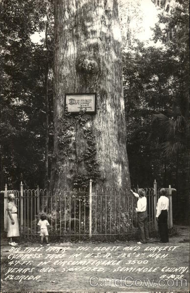 Big Tree Park - Oldest and Largest Cypress Tree in U.S.A. Sanford Florida