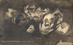 A bunch of Lotus - Grass Lake Circa 1910 Postcard