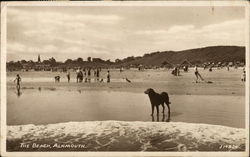 People and dogs on the Beach