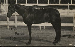 Dan Patch, World's Champion Harness Horse