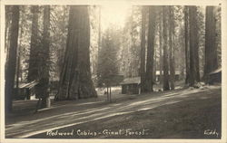 Redwood Cabins, Giant Forest