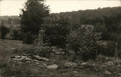 Rocks in Foreground and Trees in Background