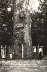 Big Tree Park - Oldest and Largest Cypress Tree in U.S.A.
