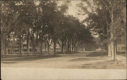 Street-Level View of Tree-Lined Avenue Postcard