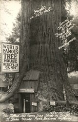 World Famous Tree House, Redwood Highway