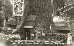 Worl Famous Tree House, Redwood Highway