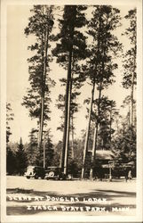Scene from Douglas Lodge, Itasca State Park Postcard