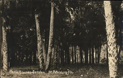 Picnic Grounds-Jungle Postcard