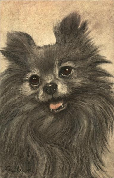 Closeup Drawing of Pomerian Breed's Face Dogs
