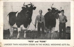 Pete and Punk