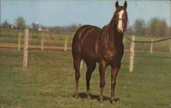 Shanghai Pierce, Quarterhorse