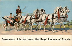 """Jenny"" and her famous Lipizzans"