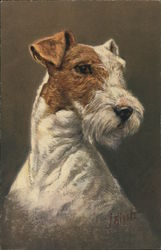 Fox Terrier - White and Brown Face