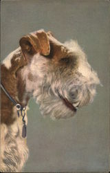 Profile of Fox Terrier's Head