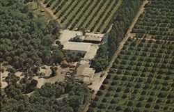 Aerial View of Blood's Hammock Groves