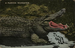 A Florida Maneater