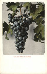 California Grapes