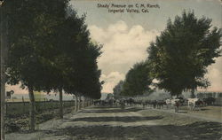 Shady Avenue on C.M. Ranch, Imperial Valley