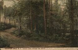 Lovers Lane Through the Woods