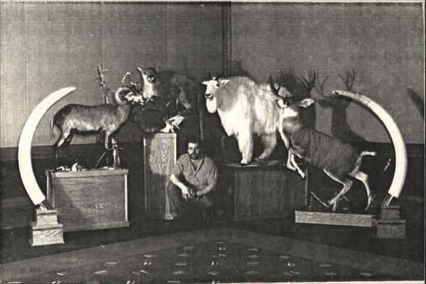 Ram Taxidermy Price List Anchorage Alaska Advertising