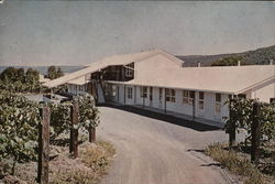 Vinehurst Motel (Home Among the Vines) Postcard