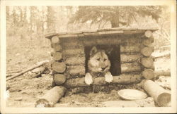 Dog in Log Doghouse: Malamute at Home