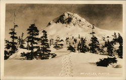 Snow-Covered Mountain with Pine Trees