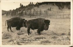 Do You Get My Meaning? Black Hills Buffalo
